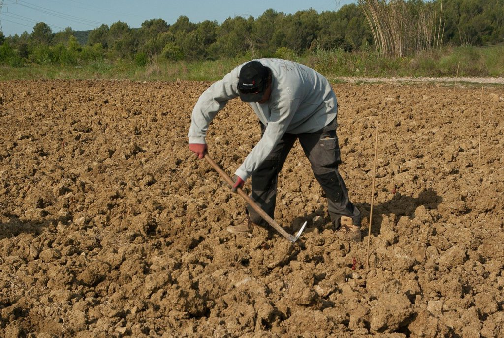 farmer, plantation, manual work